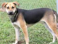 German Shepherd Dog - Tricia - Medium - Adult - Female
