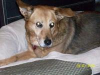 German Shepherd Dog - Winnie - Medium - Senior - Female