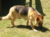 Destiny is an energetic dog that will do best in an