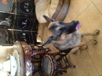 Purebred German Shepherd needs to be rehomed. She was