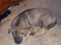 greetings i have a German Guard husky mix new puppy 1