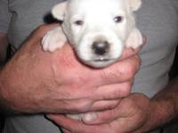 He is 22 Days old will be Ready November 4th He is 6/8
