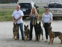 AKC German Shepherd puppies. Champion bloodlines.