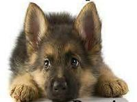 Hi i am Owner of K9 Expo Kennel I am welcoming everyone