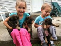 These are great puppies! They were born June 6 and are