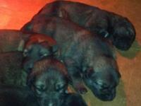 These are excellent puppies! They were born November 3
