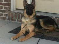 9 mth aged, male. Around date on all tries. Includes
