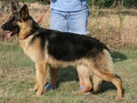 Doppel-Dehaus German Shepherds has been breeding German