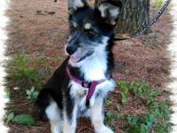 Meet sweet Willow. She is a German Shepherd/Schnauzer