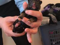 We have 13 Pure bred German Sheppard puppies for sale,