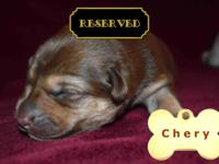We are now accepting deposits on our current litter of