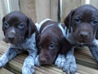 The puppies are being raised around busy family life,