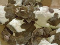 Welcome To The World New Friends!: 13/THIRTEEN Puppies;