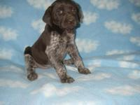 Daffodil is a beautiful puppy who comes with AKC