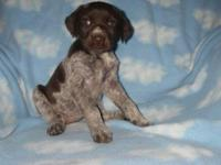 Daisy is a beautiful puppy who comes with AKC
