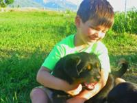 The puppies are extremely powerful and very sociable,