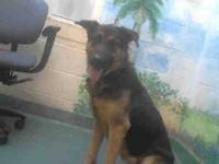 German Shepherd Dog - Gitana - Large - Adult - Female -