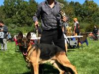 AKC West German Champion bloodlines black/red and