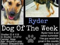 German Shepherd Dog - Ryder(cl) - Medium - Young - Male