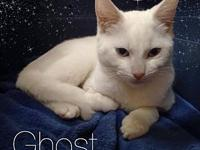 Ghost's story Ghost is a good boy! He is good natured,