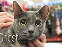 Ghost's story The adoption fee is $85.00 with an