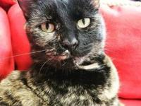 My story *Polydactyl cat alert* Introducing Ghoulinda,