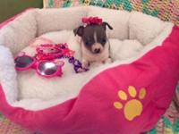 Meet the teacup princess of the house! Gia is so