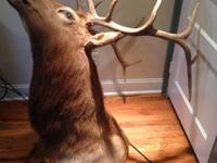 This giant elk head needs to go. Only asking 400 on