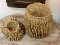 Giant Ridge Sea Sponges Great with air fans in your