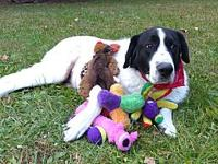 Gideon's story Attention Big Dog Lovers! Have we got a