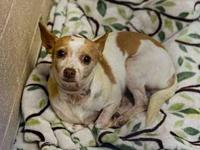Gidget needs local foster's story Please contact Fran