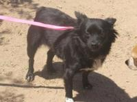 Gidget is a 1-4 year old, 10 lb miniature German spitz