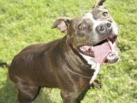 Gidget's story Gidget! This gal is a survivor! She was