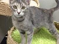 Gigi's story Gigi is a spayed female dilute Tabby with