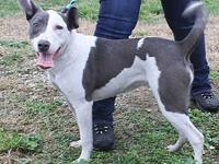 GIGI's story MEET GIGI! A 1 year old, female,