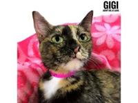 Gigi's story Hi there, my name is Gigi! I'm beautiful,
