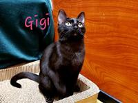 "GIGI's story ""My name is GIGI!"" ""You can count on me to"