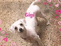 GIGI's story TO MEET AND FOR MORE INFO CALL NO TEXT  4