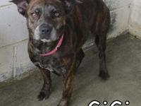 Gigi's story Gigi here is a sweet girl. She is a dog