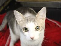 Gilbert is a 4-5 month old sweetheart who loves to play