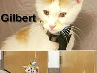 Gilbert's story Visit this organization's web site to