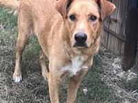 Gilbert's story Gilbert is 2 yo retriever mix. He is
