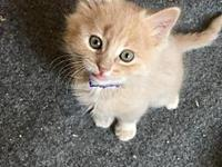 Gilby's story Meow! My name is Gilby and I am a male