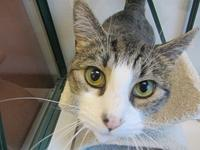 Gillian's story Gillian is a 3 yr old shorthaired white