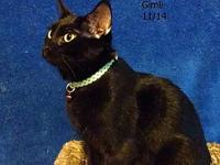 Gimli's story Gimli is a sweet and social 1 year old