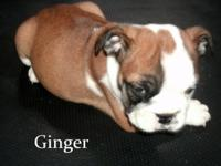 Born on August 3rd,Ginger is ready for a new home. She