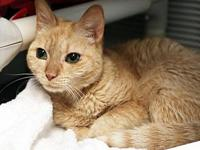 Ginger's story Friendly, Cuddly, Fun Ginger is a social