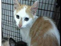 Ginger's story Visit this organization's web site to