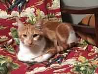 Ginger's story **Currently in foster care.  Please