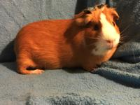 GInger Snap is a very shy girl.  She is a cuy, so it is